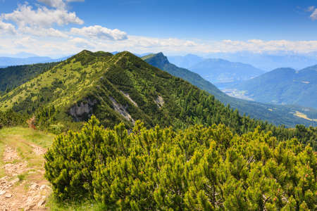 mugo: Panorama from Italian alps, mugo pines along a mountain trekking path