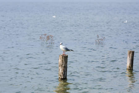 palisade: White bird standing on palisade from Delta del Po Italy, nature, birdwatching