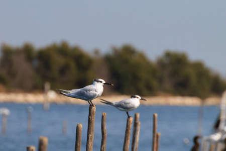 birdwatching: Birds from delta del Po. Italian nature. Birdwatching