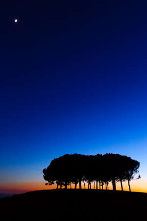 over hill: Hills panorama at sunset. Pines over hill. Minimal landscape