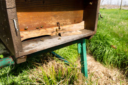 beekeeping: Bees house entrance detail. Beekeeping, agriculture. Rural life