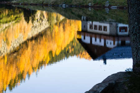 mirrored: House reflected on water with yellow pines. Autumn panorama. House mirrored