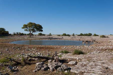 pozo de agua: Okaukuejo pozo de agua del Parque Nacional de Etosha, Namibia