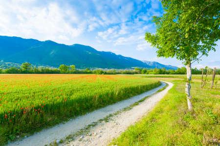 Vuil weg door Italiaanse platteland. Gebied van rode klaprozen. Plattelandsleven. Italiaans landschap