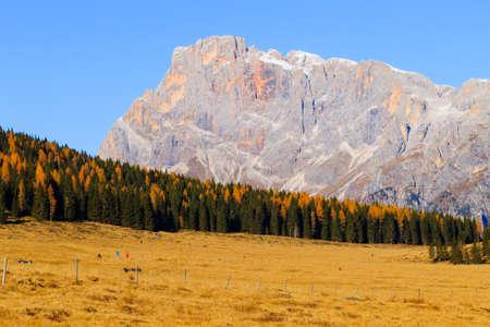 yellow trees: Autumn landscape from italian Alps. Yellow trees. Beautiful dolomites view Stock Photo