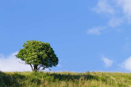 A summer landscape with an isolated tree over a blue sky. Italian Alps