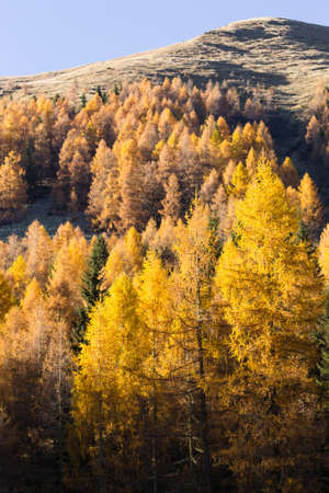 Autumn landscape from italian Alps. Yellow trees. Beautiful dolomites view Stock Photo