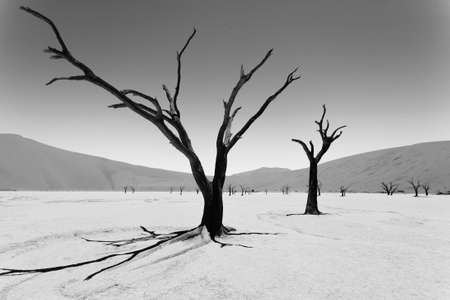 vlei: A view from Dead Vlei, Sossusvlei Namibia. Image digitally altered intentionally. Black and white. Stock Photo