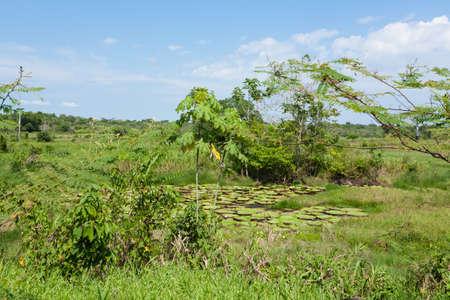 amazonia: Panorama from Amazon rainforest, Brazilian wetland region. Navigable lagoon. South America landmark. Amazonia