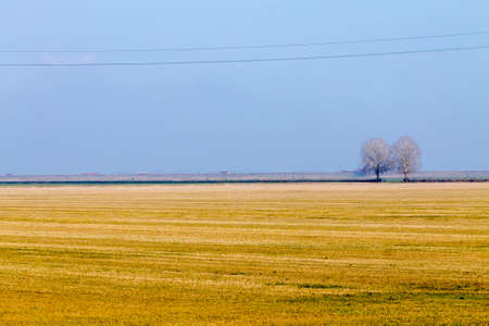 Rural Italian landscape from Po river lagoon.Plowed fields with perspective lines. Isolated trees