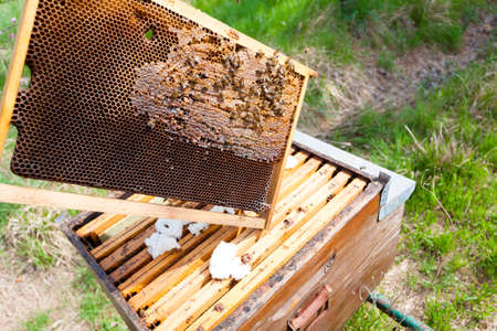 comb: Open hive detail. Beekeeping, agriculture, rural life. Stock Photo