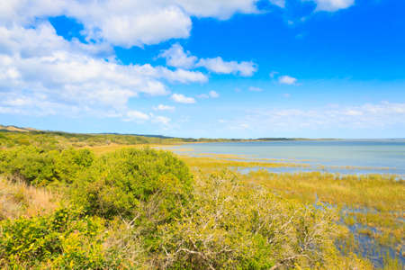 savannas: Isimangaliso Wetland Park landscape, South Africa. Beautiful panorama from Africa. Safari and outdoor