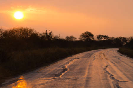 Perspective road view at dawn from Kruger National Park. South Africa landscape. Stock Photo