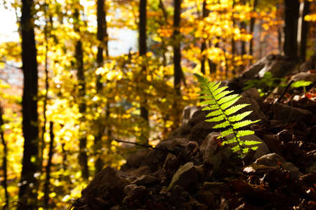 Fern leaf close up, autumn background. Beauty in nature. Autumn lansdscape Stock Photo
