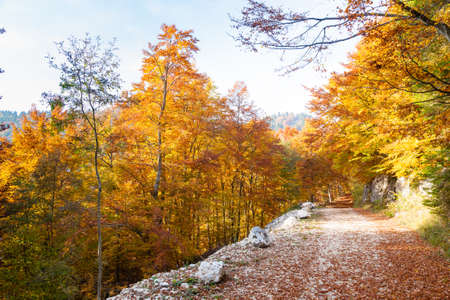 Autumn mountain landscape. Dirt road in perspective. Grappa mountain, Italian Alps