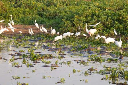 Beautiful Pantanal landscape, South America, Brazil. Nature and wildlife along famous Transpantaneira dirt road.