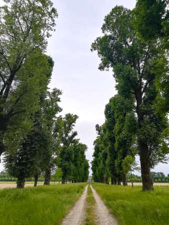 Dirt path through countryside. Rural landscape Reklamní fotografie