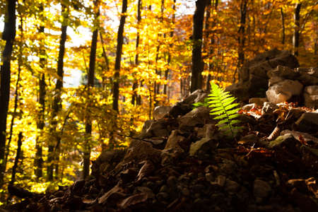 Fern leaf close up, autumn background. Beauty in nature. Autumn lansdscape Reklamní fotografie