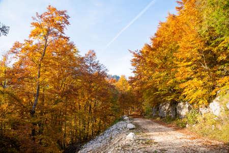 Autumn mountain landscape. Dirt road in perspective. Grappa mountain, Italian Alps