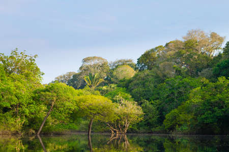 Panorama z amazońskiego lasu deszczowego, brazylijskiego regionu mokradeł. Żeglowna laguna. Punkt orientacyjny Ameryki Południowej. Amazonia