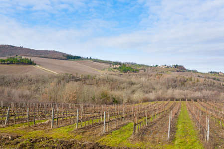 Rows of vineyards from Tuscany hills. Italian agriculture. Beautiful landscape Reklamní fotografie