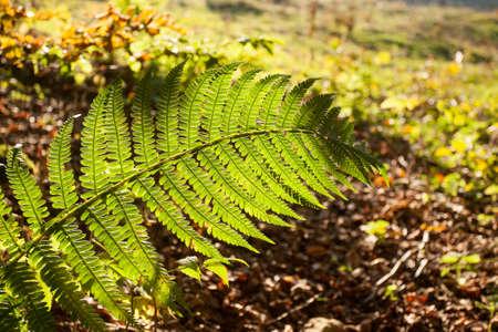 Fern leaf close up, autumn background. Beauty in nature. Autumn lansdscape Archivio Fotografico