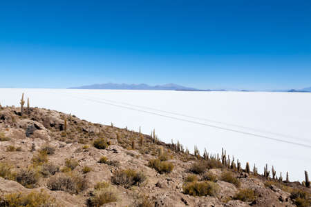 Salar de Uyuni view from Incahuasi island, Bolivia. Largest salt flat in the world. Bolivian landscape