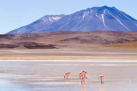 Laguna Honda landscape,Bolivia. Beautiful bolivian panorama. Blue water lagoon