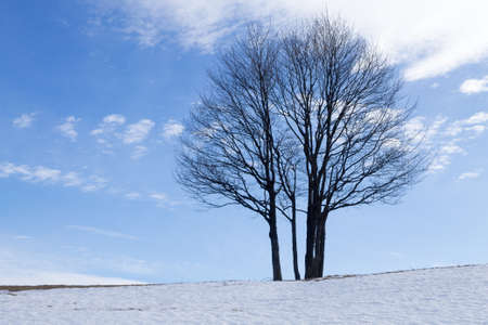 A winter landscape with an isolated tree over a blue sky