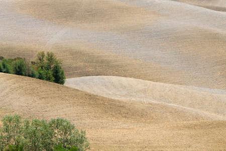 Curves background. Tuscany hills summer landscape. Nature background