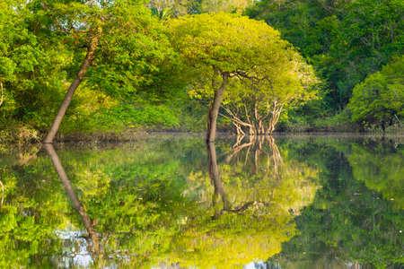 Panorama from Amazon rainforest, Brazilian wetland region. Navigable lagoon. South America landmark. Amazonia