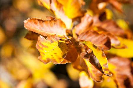 Autumn foliage background, yellow leaves. Nature background Stock fotó