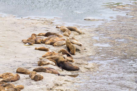 Elephant seals on Caleta Valdes beach, Patagonia, Argentina. Argentinian wildlife