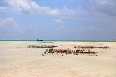 Seaweed cultivation on beach, Zanzibar, Tanzania. Africa panorama. Indian ocean scenery Фото со стока