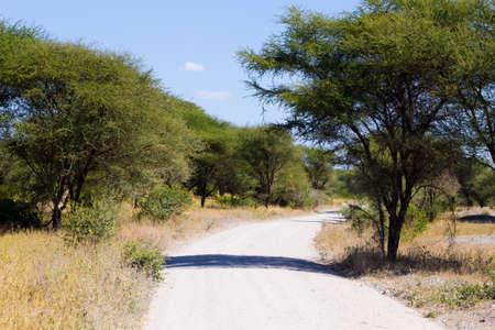 African safari. Dirt road in Tarangire National Park , Tanzania landscape, Africa.