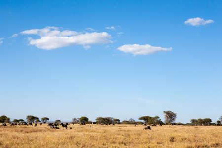 Tarangire National Park panorama, Tanzania, Africa. African safari