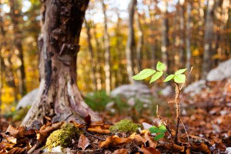 Wild plant leaf close up, autumn background.  Beauty in nature. Autumn lansdscape Stockfoto