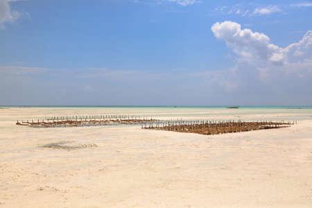 Seaweed cultivation on beach, Zanzibar, Tanzania. Africa panorama. Indian ocean scenery Zdjęcie Seryjne