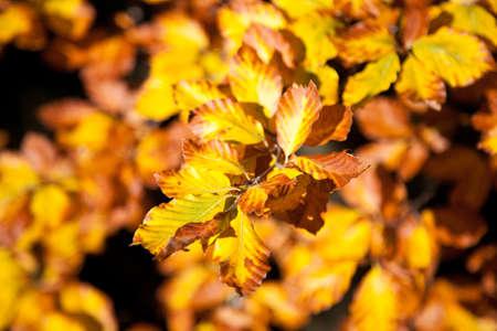 Autumn foliage background, yellow leaves. Nature background Stockfoto