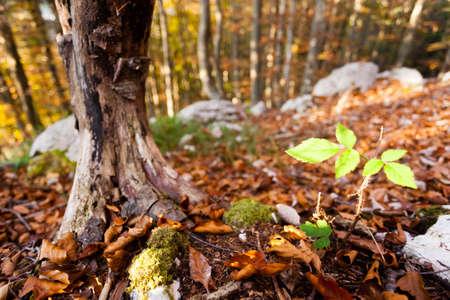 Wild plant leaf close up, autumn background.  Beauty in nature. Autumn lansdscape Archivio Fotografico