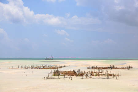 Seaweed cultivation on beach, Zanzibar, Tanzania. Africa panorama. Indian ocean scenery Banque d'images