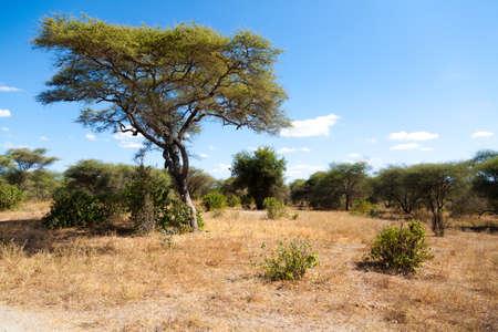 Tarangire National Park landscape, Tanzania, Africa. African safari