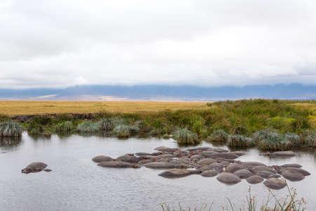 Hippopotamus on water. Ngorongoro Conservation Area crater, Tanzania. African wildlife Archivio Fotografico