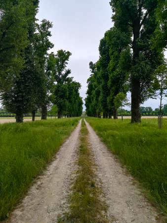 Dirt path through countryside. Rural landscape Archivio Fotografico