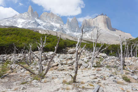 Burned woodland on French Valley, Torres del Paine National Park, Chile. Chilean Patagonia