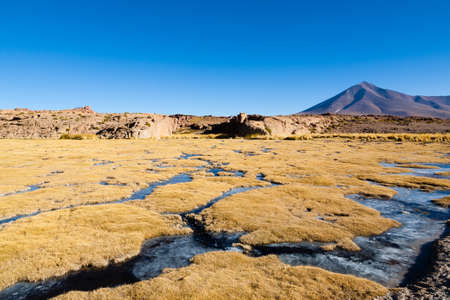 Beautiful bolivian landscape,Bolivia. Lakes and associated wetlands called Bofedales. 免版税图像