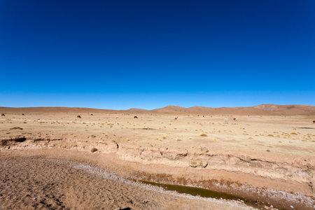 Bolivian llama breeding on Andean plateau,Bolivia 免版税图像