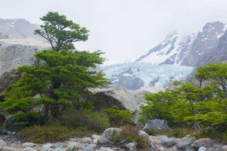 Piedras Blancas Glacier view, Los Glaciares National Park.  El Chalten, Patagonia Archivio Fotografico