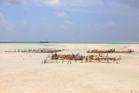 Seaweed cultivation on beach, Zanzibar, Tanzania. Africa panorama. Indian ocean scenery Archivio Fotografico