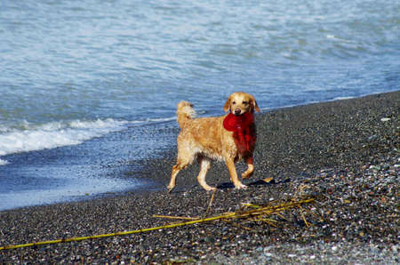 Dog playing on the beach after swimming photo